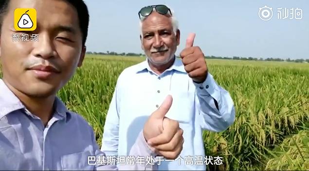 中国小伙在巴基斯坦推广杂交水稻
