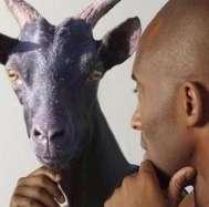 科比干了羊