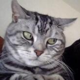 生肖属猫d