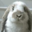 神云羽贼兔